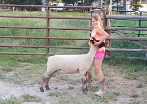 5 Cattle….4 Sheep – 4-H Livestock – Meetings Northwest, LLC